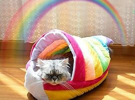 Decdeal Cama de Gatos Mascotas Casa Nido Suave Corto Gatito de Felpa Todas Las Estaciones Cueva Color Arcoiris para Animales Domésticos para Dormir